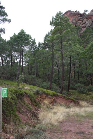 Ruta Puertomingalvo-Mosqueruela